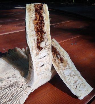 Валуй - Russula foetens